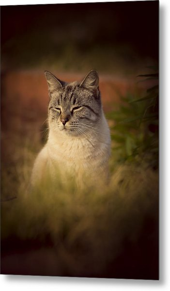 Sunny Days Like These Metal Print
