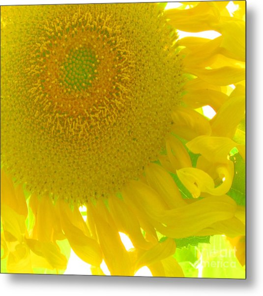 Sunny Flower Metal Print by Marcia Nichols