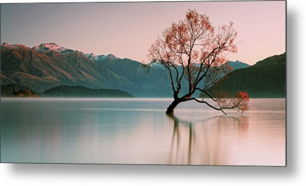 Sunrise At Lake Wanaka Metal Print by Steve Daggar Photography