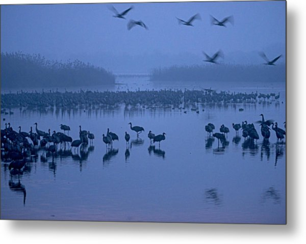 Sunrise Over The Hula Valley Israel 4 Metal Print