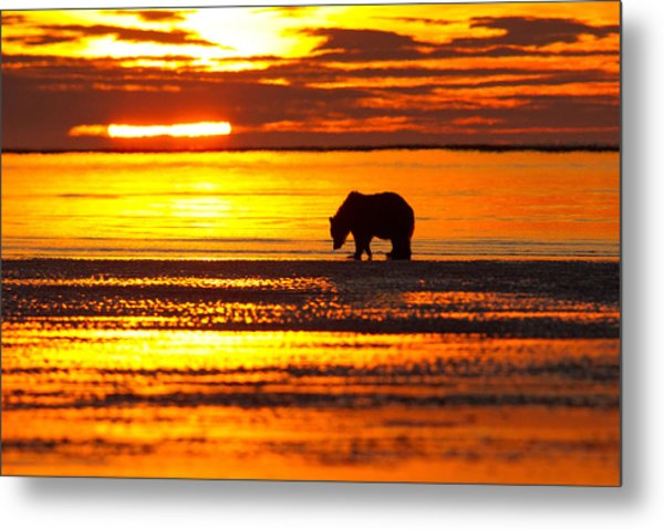 Sunrise Bear Metal Print