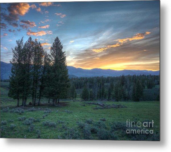 Sunrise Behind Pine Trees In Yellowstone Metal Print