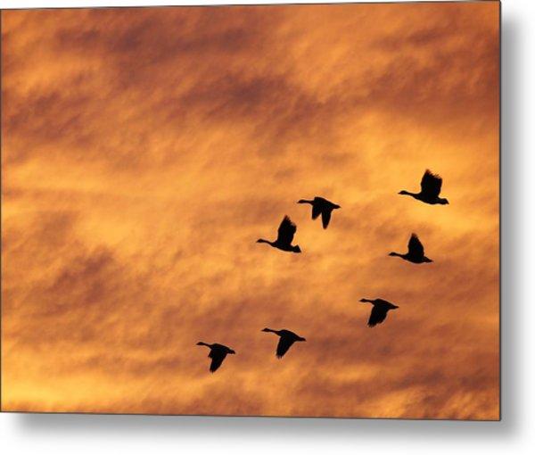 Sunrise Flight 2 Metal Print