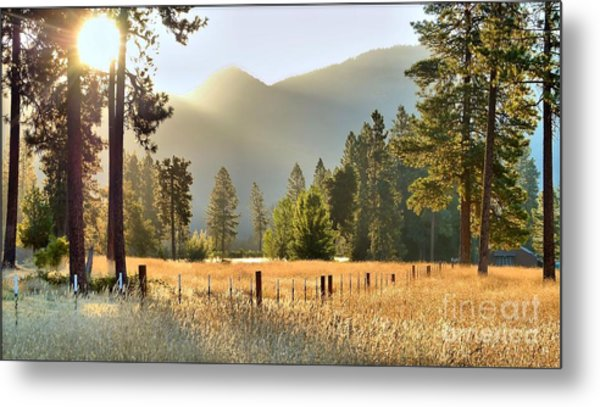 Sunrise Gold Metal Print