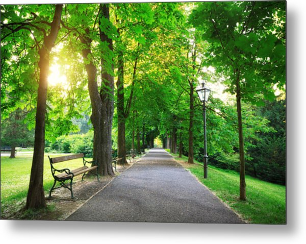 Sunrise In A Green Park Metal Print by Borchee