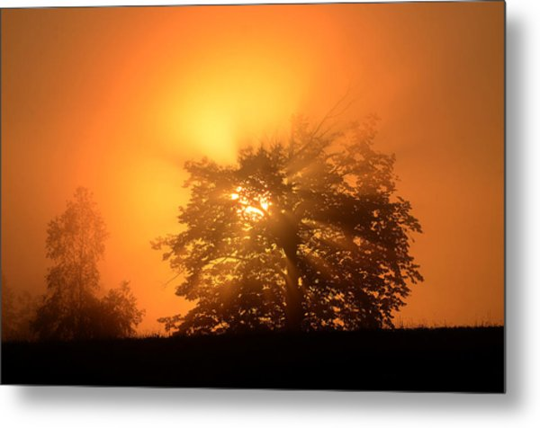 Sunrise In Fog Metal Print