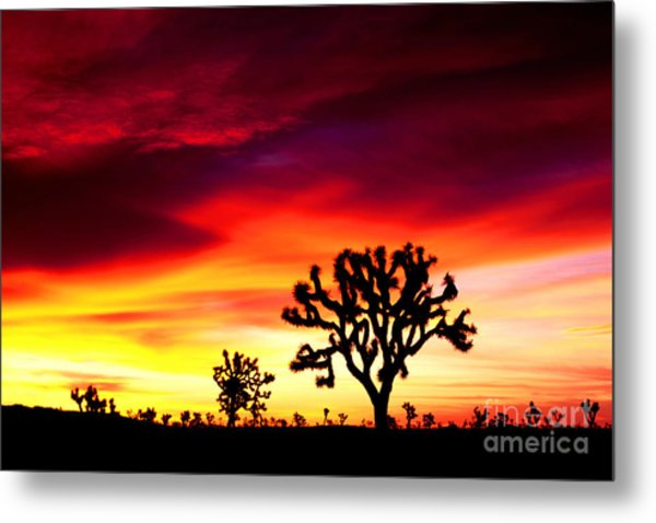 Sunrise In Joshua Tree Nat'l Park Metal Print