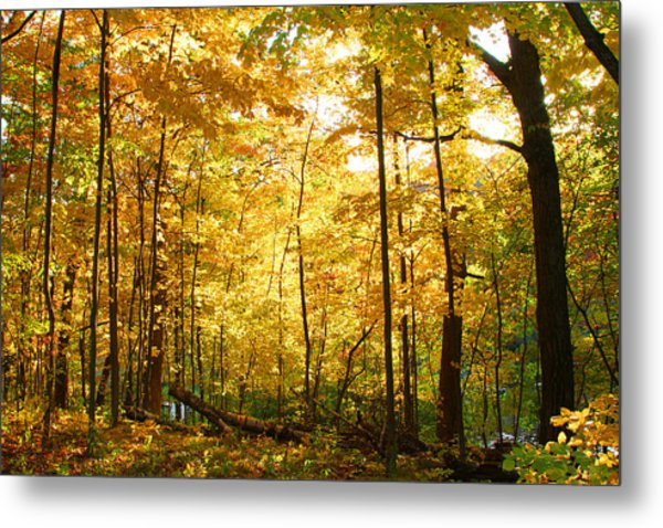 Sunrise In The Forest Metal Print by James Hammen