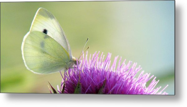 Sunrise In The Thistle Fields Metal Print