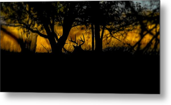 Sunrise In The Timber Metal Print