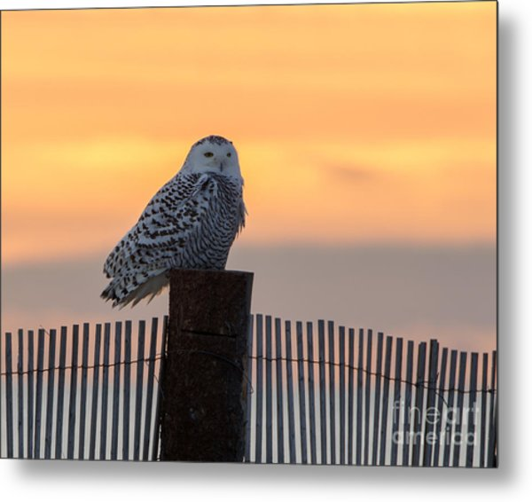 Winter At The Shore Metal Print