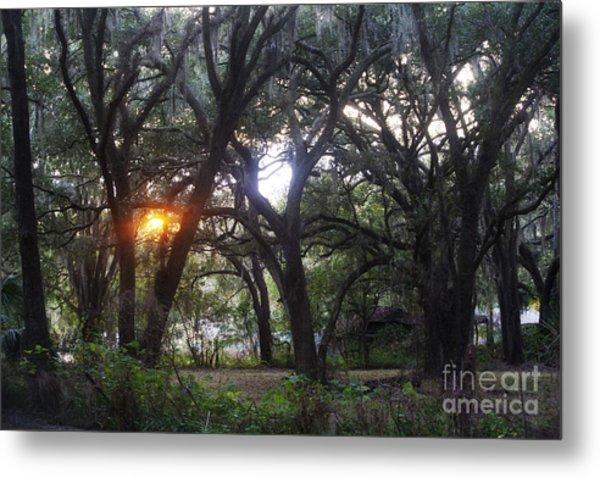 Sunrise Through The Oaks Metal Print