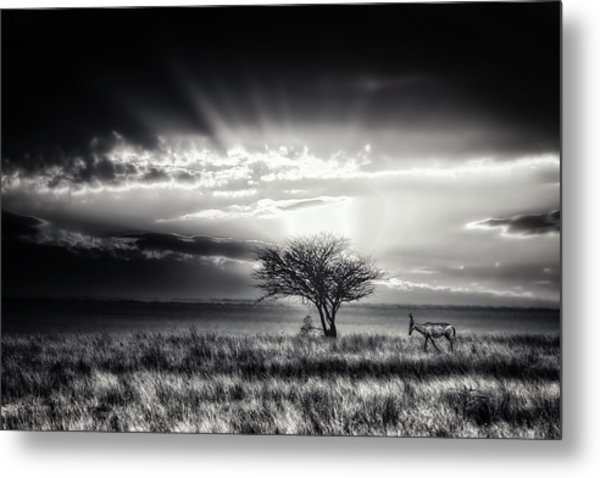 Sunrise With Hartebeest Metal Print by Piet Flour