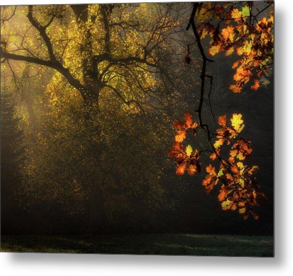 Sun's Decoration Metal Print by Marek Boguszak
