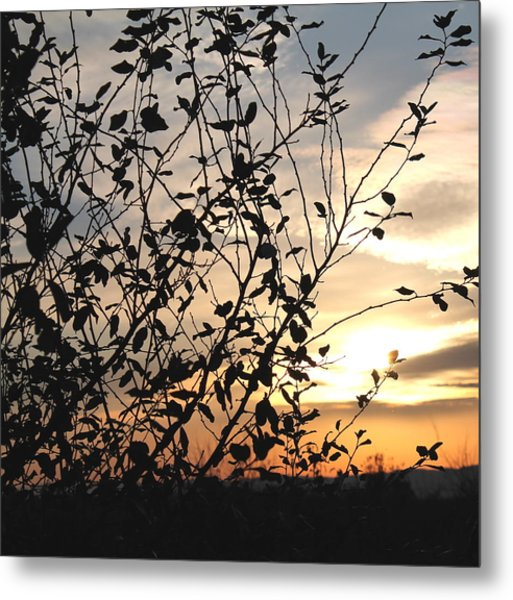 Sunset And Nature's Silhouette Metal Print