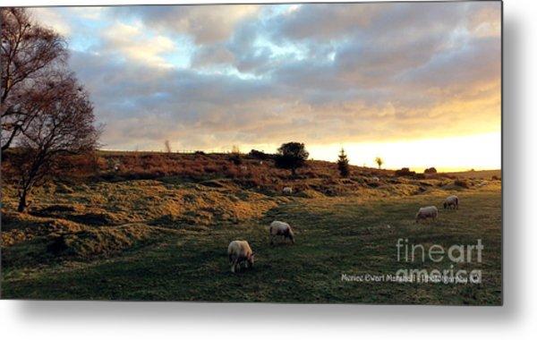 Sunset And Sheep Metal Print by Merice Ewart