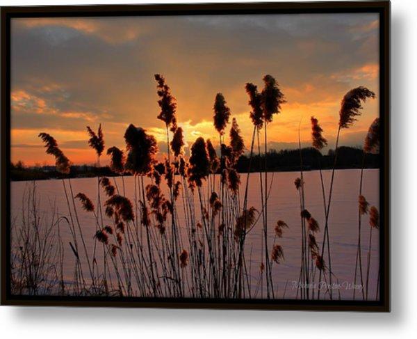Sunset At The Pond 3 Metal Print