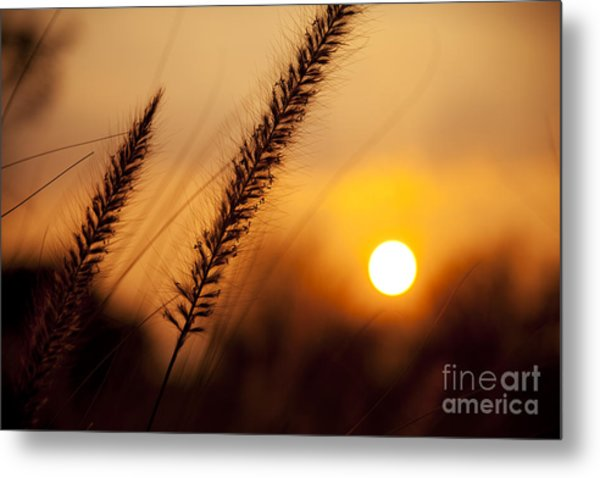 Sunset Fountain Grass Metal Print