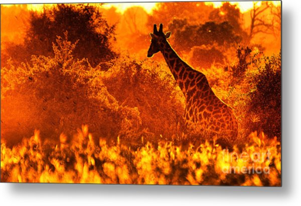 Sunset Giraffe Metal Print