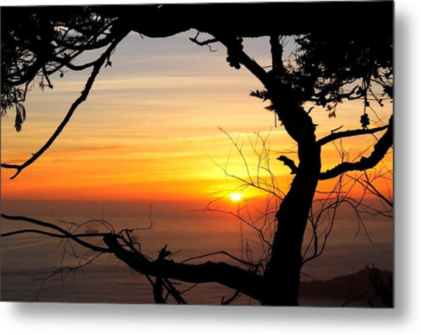 Sunset In A Tree Frame Metal Print
