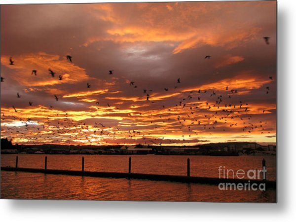 Sunset In Tauranga New Zealand Metal Print
