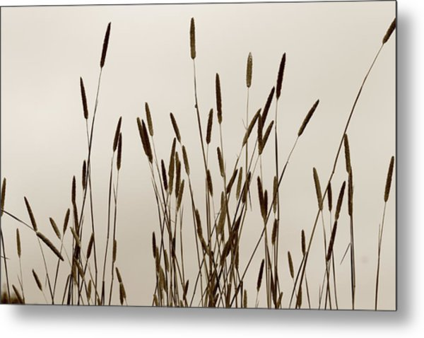 Sunset In The Countryside Metal Print