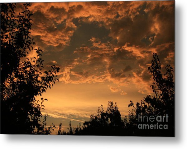 Sunset In The Orchard Metal Print by Cari Gesch