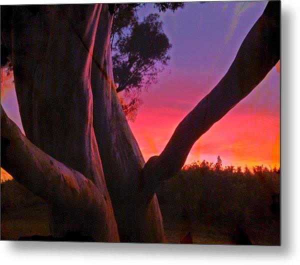 Sunset Madrone 3 Metal Print