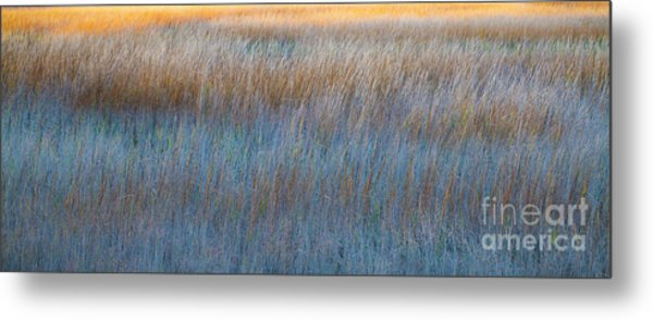 Sunset Marsh In Blue And Gold Metal Print