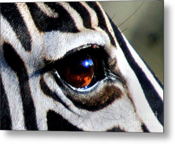 Sunset Reflected In Zebra's Eye    Metal Print