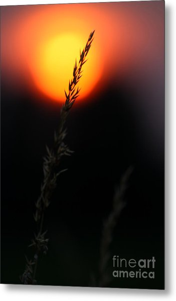Sunset Seed Silhouette Metal Print