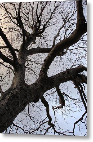 Sunset Skeleton Tree Metal Print by Michel Mata
