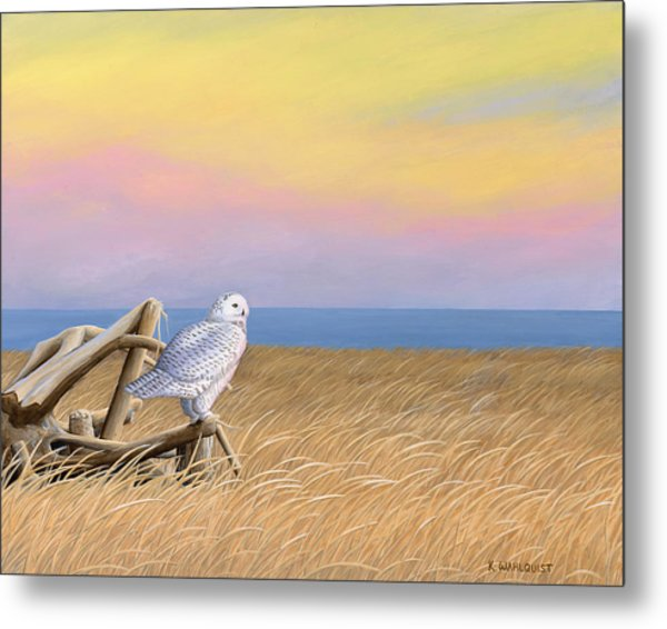 Sunset Snowy Owl Metal Print by Kirsten Wahlquist