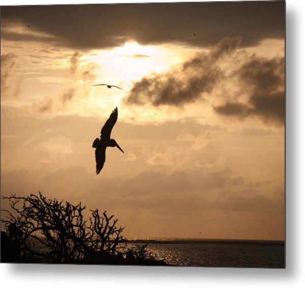 Sunset Soaring Metal Print