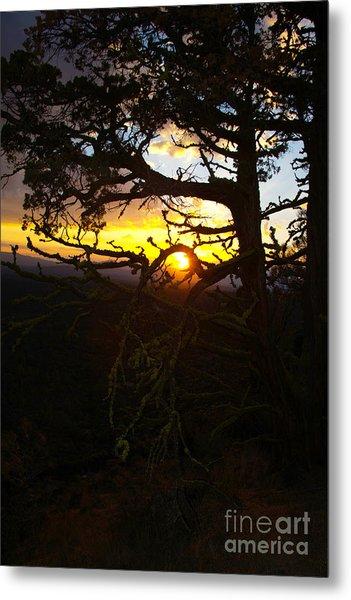 Sunset Through Branch Metal Print