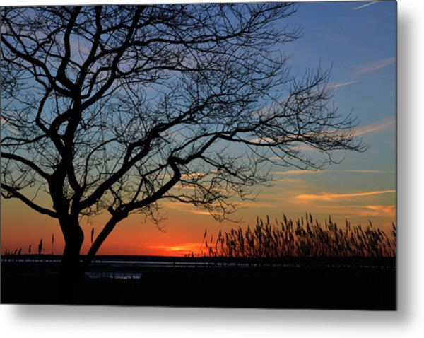 Sunset Tree In Ocean City Md Metal Print