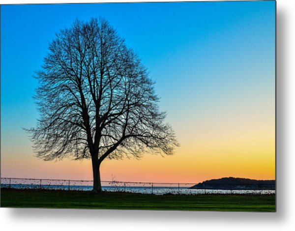 Metal Print featuring the photograph Sunset Tree by Michael Hubley
