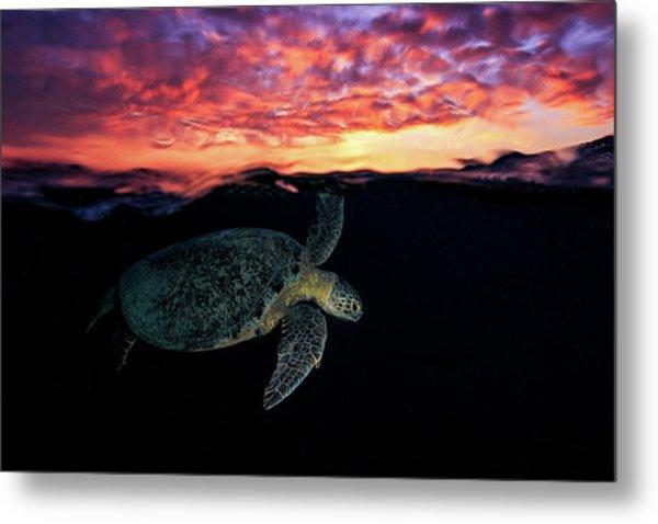 Sunset Turtle Metal Print