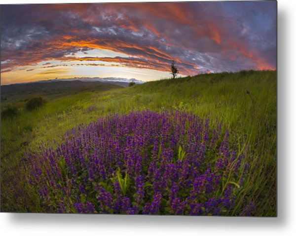 Sunset With Lavender Metal Print by Ovidiu Caragea