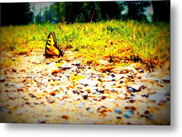Sunshine Butterfly Metal Print