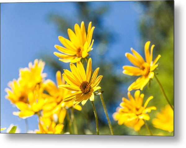 Sunshine Metal Print
