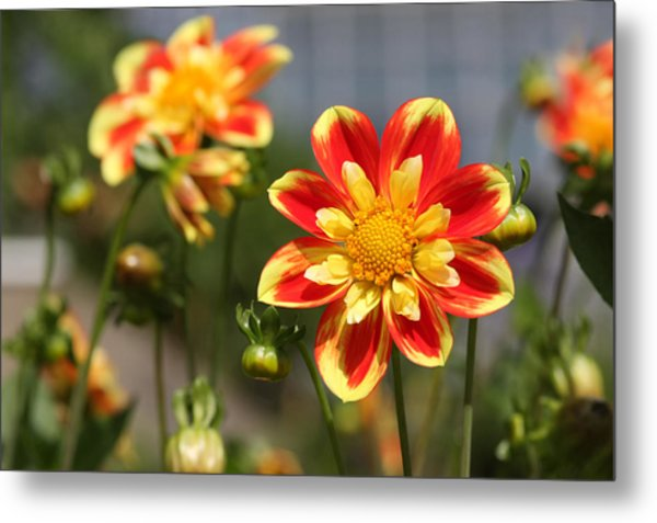 Sunshine Flower Metal Print