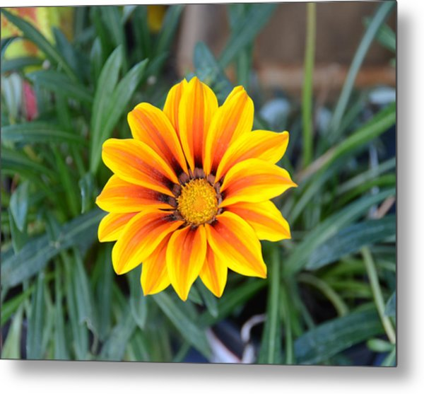Sunshine Metal Print by Julie Cameron