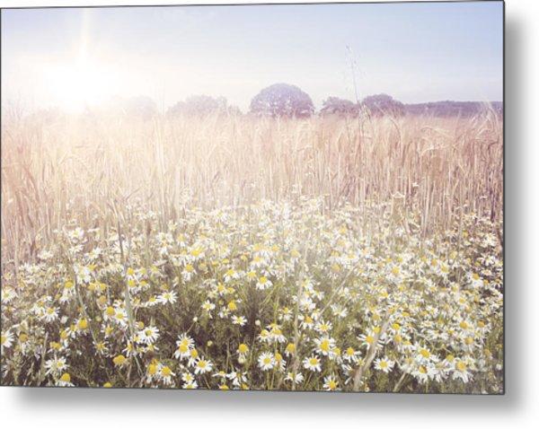 Sunshine Over The Fields Metal Print by Natalie Kinnear