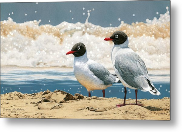 Surf 'n' Turf - Franklin's Gulls Metal Print