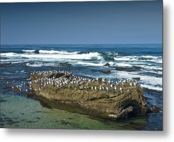 Surf Waves At La Jolla California With Gulls Perched On A Large Rock No. 0194 Metal Print