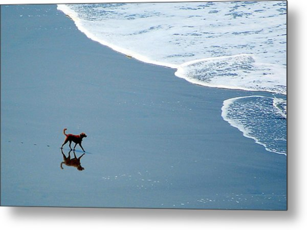 Surfer Dog Metal Print