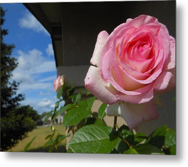 Surreal Rose Metal Print