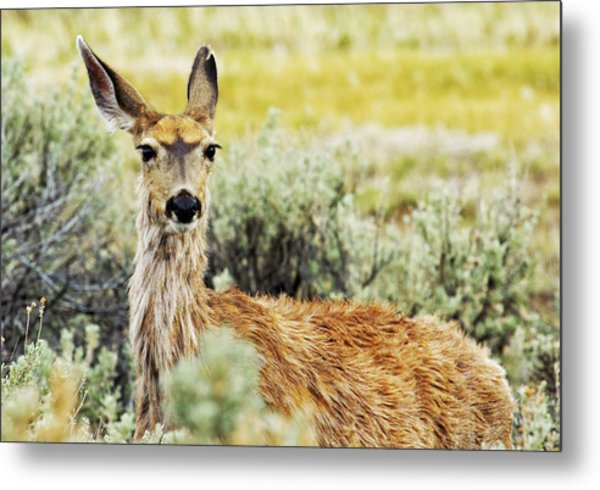 Metal Print featuring the photograph Surround Sound by Belinda Greb