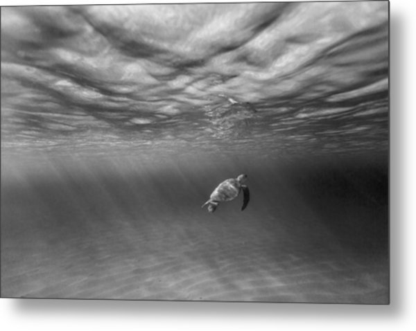 Suspended Animation. Metal Print
